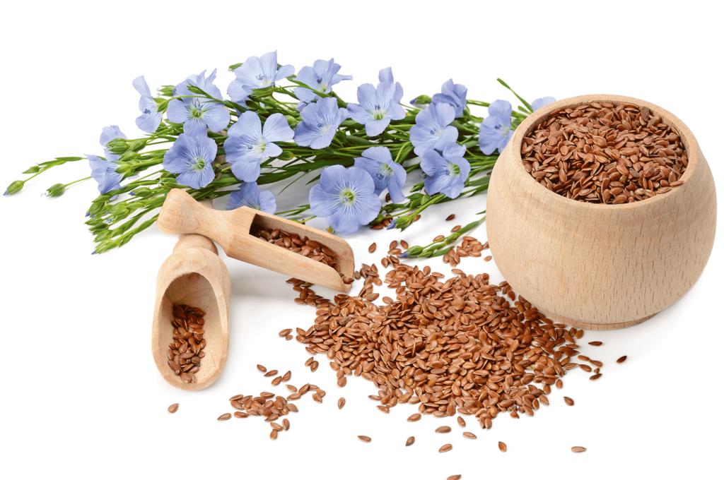 flaxseed plant - benefits of flaxseeds